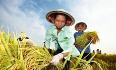 Bayer hỗ trợ nông hộ nhỏ canh tác thuận lợi hơn