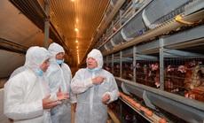 """""""Nữ hoàng hột vịt"""" Ba Huân được mời dạy nông dân cách nuôi gà hiệu quả"""