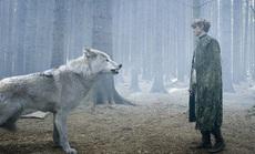 """Phát hiện choáng váng từ hóa thạch 4.000 """"ma sói"""" kỷ băng hà"""
