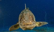 """Sinh vật tái sinh sau 66 triệu năm tuyệt chủng: phát hiện phiên bản """"thủy quái"""""""