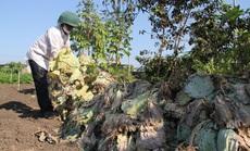 Nông dân nhổ bỏ hàng trăm tấn rau củ vì giá thấp, không người mua