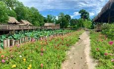 Du lịch cây nhà lá vườn