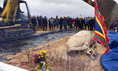 Dùng máy xúc chôn cất, an táng cá voi hơn 2 tấn ở Quảng Bình