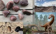 Kho báu rùng mình: Dàn siêu quái thú bụng đầy đá quý, 155 triệu tuổi