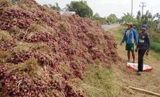 """Hành tím Vĩnh Châu lại tồn đọng 50.000 tấn sau 6 năm """"giải cứu"""""""