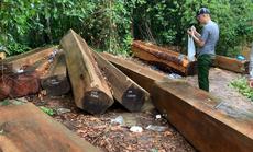 Để rừng bị phá hoại, Hạt trưởng Kiểm lâm bị kỷ luật cảnh cáo