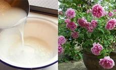 Ai cũng đổ nước vo gạo vì không biết 8 công dụng kỳ diệu này