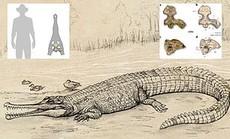 """Đào được """"trùm cá sấu"""" 5 triệu tuổi, to hơn nhiều loài khủng long"""