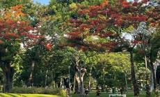 Tìm nhịp điệu tâm hồn nơi công viên