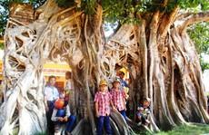 Ngắm cây bồ đề có bộ rễ tạo thành 3 'cổng' độc đáo ở Phú Yên