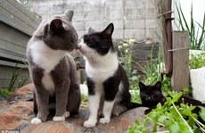 'Thiên đường mèo' ở Nhật Bản