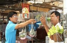 """Làng hoa Sa Đéc xuất hiện """"cây không khí"""" thu hút khách hàng"""