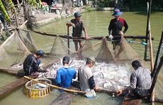 Tiếp tục đòi công bằng cho cá tra