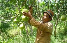Thêm 10.000 ha cây ăn trái chất lượng cao ở ĐBSCL