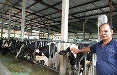 """Cơn sốt"" bò sữa"