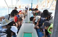 Ngắm đáy biển từ tàu đáy kính