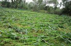 Lốc xoáy kinh hoàng ở Hà Tĩnh