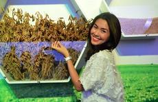 Cái nhìn mới về hạt đậu nành