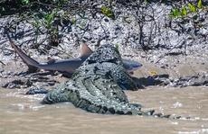 Cá sấu khổng lồ nuốt chửng cá mập