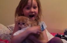 Clip bé vỡ òa trong hạnh phúc khi mở món quà mèo con