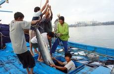 Đang câu cá ngừ bị cá chuồn phóng lên đâm thủng mắt