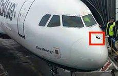 Đâm phải chim, máy bay hạ cánh khẩn