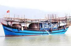 Một tàu câu mực khơi trúng 2,4 tỉ đồng