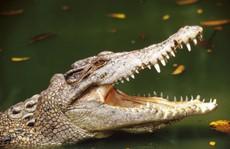 Bé trai 11 tuổi bị cá sấu nuốt gọn