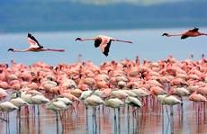 Hoang dã Kenya