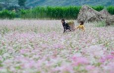 Lên Đồng Văn ngắm thung lũng hoa tháng 10
