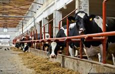 Vissan, Nutifood bao tiêu đàn bò của bầu Đức