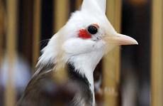 Kỳ thú chơi chim, cây đột biến gen