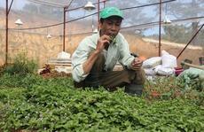 Trồng 100 m2 rau rừng, thu hơn 40 triệu đồng một năm