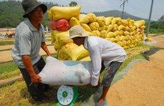 'Không có lợi ích nhóm' ở thị trường lúa gạo trong nước