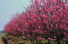 Chơi cây gì dịp Tết mang may mắn cả năm?