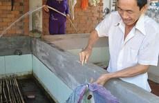 Kiếm bạc triệu từ nuôi lươn không bùn