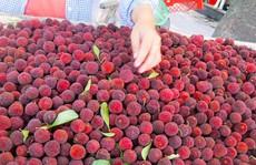 Nguồn gốc của quả thanh mai trên thị trường Hà Nội