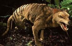 10 loài động vật tuyệt chủng thời cổ đại có hy vọng sống lại