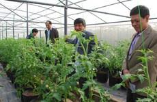 Tỉ phú đô la thích trồng rau