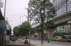 Nhận lỗi, Hà Nội dừng chặt cây xanh