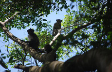 Hương rừng U Minh Hạ