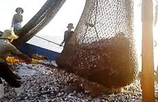 Tận diệt tài nguyên biển
