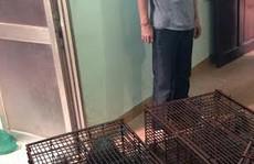 'Giải cứu'  11 con tê tê làm mồi cho quán nhậu