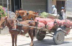 Kiếm hàng chục triệu đồng mỗi tháng nhờ xe ngựa kéo