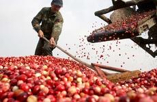 Nông sản Việt thêm cơ hội vào EU