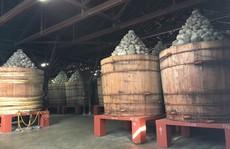 Thăm nhà máy chế biến miso ở xứ phù tang
