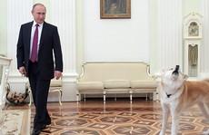 Ông Putin dắt chó cưng đi phỏng vấn làm phóng viên hết hồn