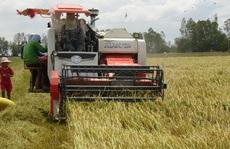 Lúa gạo bị làm giá