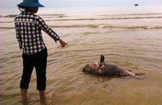 Ngư dân lao đao, lái buôn thất thu vì cá biển chết hàng loạt