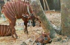 Thực hư thú chết ở Vinpearl Safari Phú Quốc